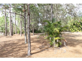 Naples Real Estate - MLS#213006335 Photo 1